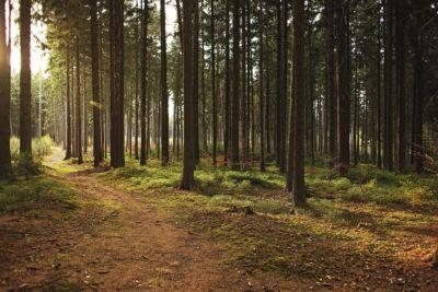 erdőápolás